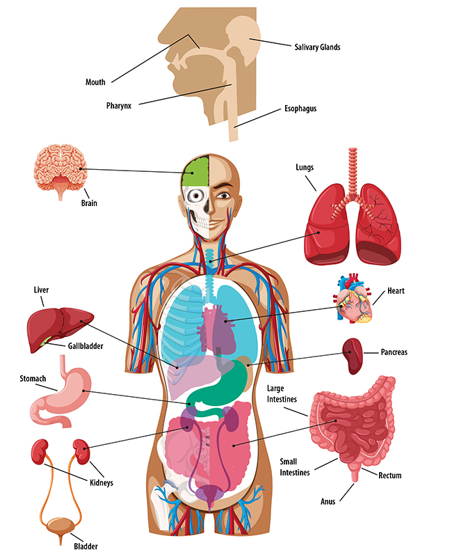 body-systems2